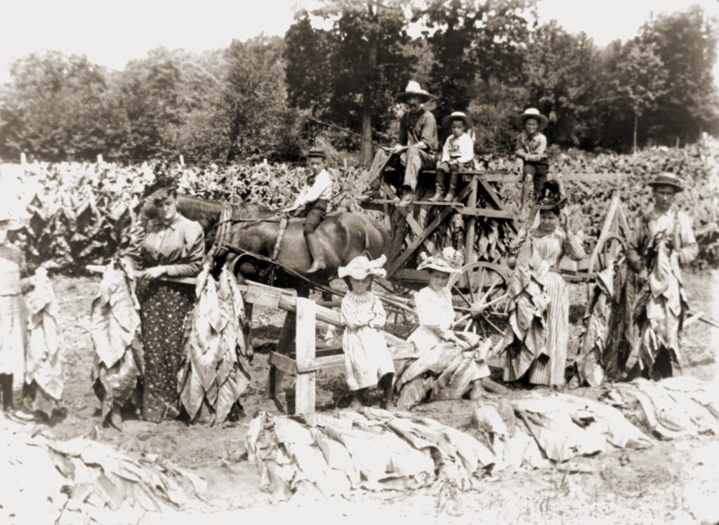 Tobacco Field and Workers